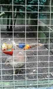 Manche Tiere müssen hinter Gittern bleiben...